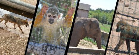Vente d'animaux aux cirques, labos... la face cachée des zoos !   Fondation Brigitte Bardot   Ces animaux sauvages ou domestiques maltraités par l'homme   Scoop.it