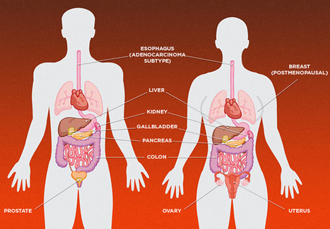 Breaking the Cancer-Obesity Link | The Scientist Magazine® | Longevity science | Scoop.it