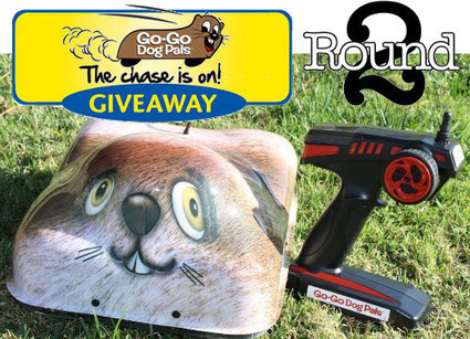 Go-Go Dog Pal Giveaway Round 2 | Interactive Dog Toys | Scoop.it