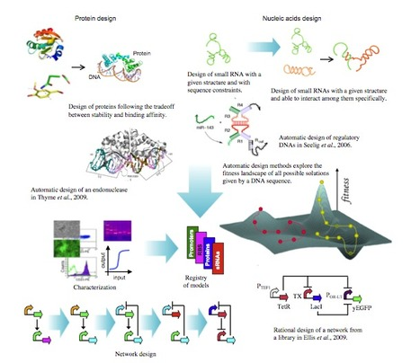 Perspectives on the Automatic Design of Regulatory Systems for Synthetic Biology | SynBioFromLeukipposInstitute | Scoop.it