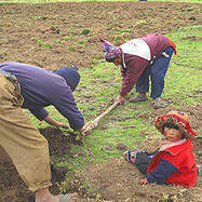 Re: The Future of Family Farming: Providing Resources for Women and Young Farmers | Global Forum on Food Security and Nutrition (FSN Forum) - FAO | BioFuels - Agriculture & Oil Trees | Scoop.it