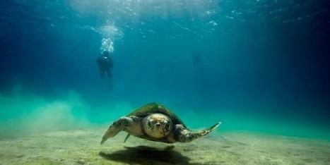 Guarda il video: a Lampedusa con i delfini e le tartarughe | Tech - Information Security - Smartphone - Developer - Marketing Web - BitCoin - LiteCoin - DogeCoin | Scoop.it