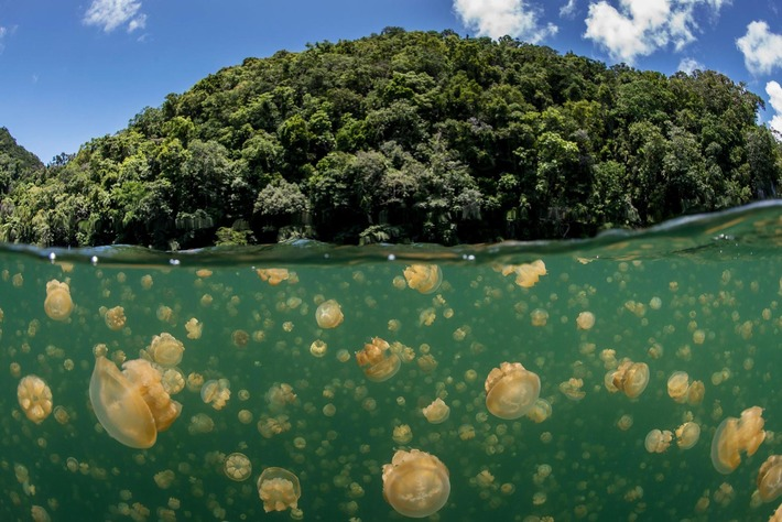 Tiny Island Nation's Enormous New Ocean Reserve is Official | Iles | Scoop.it