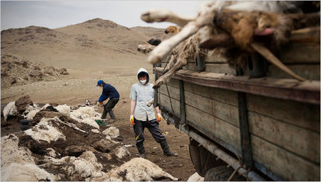 South Hangay Province Journal - Winter Leaves Mongolians a Harvest of Carcasses - NYTimes.com | The Mongols | Scoop.it
