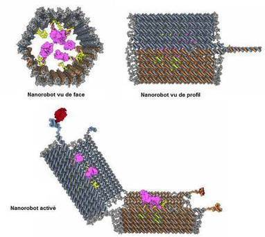 Actualité > Des nanorobots d'ADN pour des thérapies anticancéreuses plus ciblées | 21st Century Innovative Technologies and Developments as also discoveries | Scoop.it