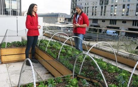 Agriculture urbaine à Paris, déjà des tests grandeur nature | Agriculture urbaine et rooftop | Scoop.it