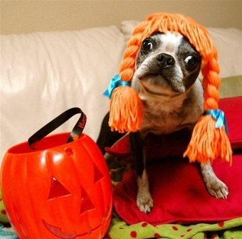 Halloween Pet Safety | Pet Sitter Picks | Scoop.it