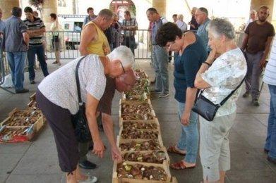 Des centaines de kilos de cèpes dans les marchés spécialisés de Dordogne | Agriculture en Dordogne | Scoop.it