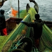 'Radical change' needed for fishing  - Stornoway Gazette   Blue Planet   Scoop.it