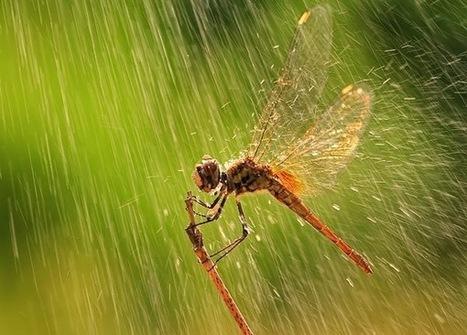 30 Beautiful Rain Photographs | Artatm - Creative Art Magazine | Fotografia aos molhos -Photo everything | Scoop.it