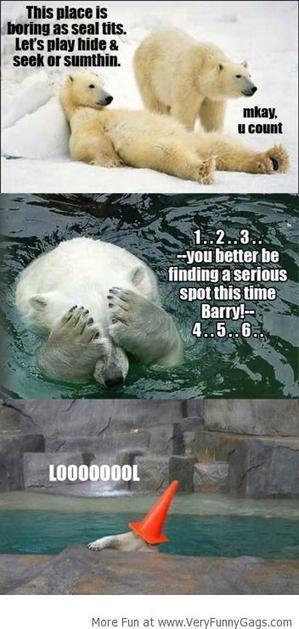 Polar Bear Hide & Seek!   Funnygags   Scoop.it