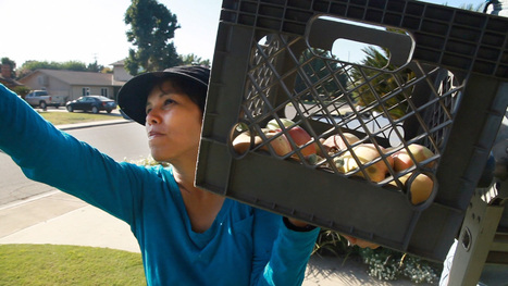 This Stanford Ph.D. Became A Fruit Picker To Feed California's Hungry | Local Food Systems | Scoop.it