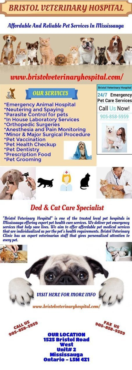 Affordable And Reliable Pet Services In Mississauga | Vet Hospital Mississauga | Scoop.it