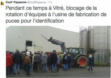 Des éleveurs passent à l'action contre le puçage électronique de leurs animaux   Faut pas pucer   Scoop.it