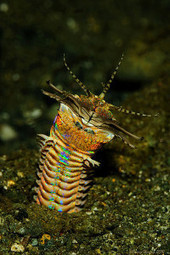 The Mystery Behind Aquarium's Missing Fish Solved: 3.5 Ft Worm - E Canada Now   saltwater   Scoop.it