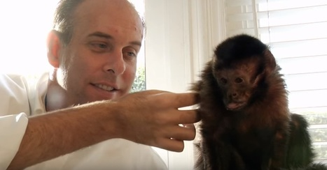 He Says That His Pet Monkey 'Alleviates' Pain, But The Touching Reason Why? AMAZING! | Pets In Pain: Need Stem Cell Nutrition! | Scoop.it