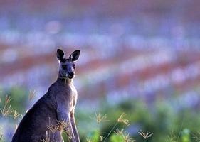 La production australienne délaisse la bouteille pour s'orienter sur les vins en vrac   Grande Passione   Scoop.it
