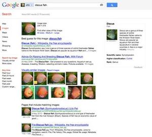 Le blog de Recherche-eveillee.com: Yahoo!, Bing et Google enrichissent leur recherche d'images | Curation, Veille et Outils | Scoop.it