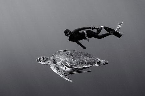 Photos : plongées de rêve en apnée   Red Bull Aventure   La plongée sous-marine   Scoop.it
