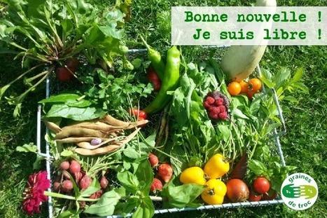 Bonne nouvelle pour les semences libres ! | CaféAnimé | Scoop.it