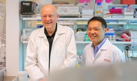 Engineered Antibody Neutralizes All Four Dengue Serotypes   Host Cell & Pathogen Interactions   Scoop.it