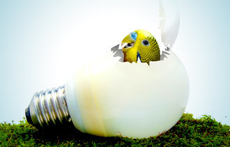 5 Ways to Hatch Your Next Business Idea | Business Attractitude | Scoop.it