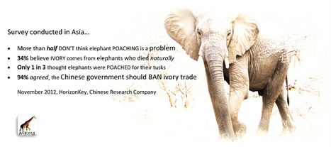People do care...if they know | Wildlife Trafficking: Who Does it? Allows it? | Scoop.it