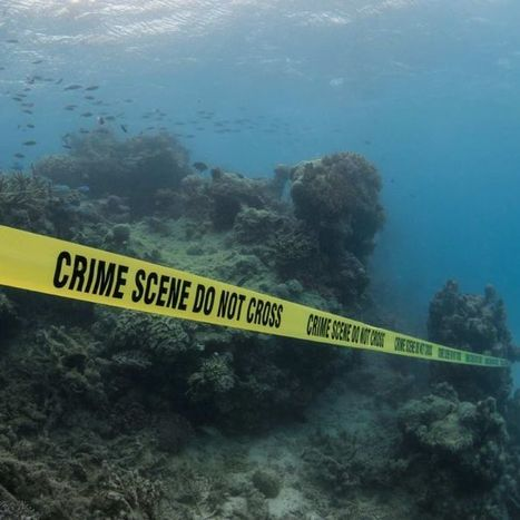 Crime scene on the Great Barrier Reef | Ecosystems | Scoop.it