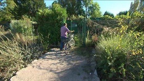 Strasbourg : les locataires des jardins familiaux du Heyritz chassés par la pollution - France 3 Alsace | Strasbourg Eurométropole Actu | Scoop.it