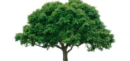 NASA Soon Able to 3D Print Trees   3D_Materials journal   Scoop.it