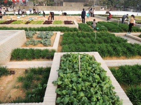 Colossal Green Value Farm Flourishes Within a Former Factory in China   People and Development   Scoop.it