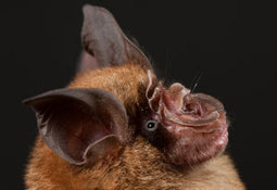 Chinese bats likely source of SARS virus, researchers report - Fogarty International Center @ NIH   Virology and Bioinformatics from Virology.ca   Scoop.it
