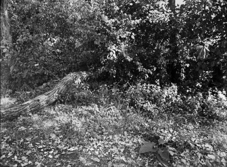 A picture of nothing.  It is my soul, where it meets the ground.   black and white film photo   Scoop.it