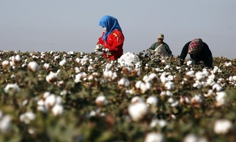 Tracing Cotton to Origin Nearly Impossible, Say Sustainability Experts - The Epoch Times | Sustainability Science | Scoop.it