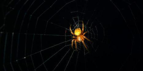 L'araignée, ingénieur en chef | responsabilité humaine | Scoop.it