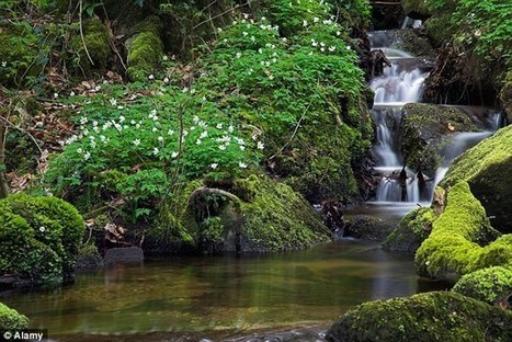 Should your office pipe in the sound of WATERFALLS? Researchers say natural sounds can improve productivity and boost brainpower | Kickin' Kickers | Scoop.it