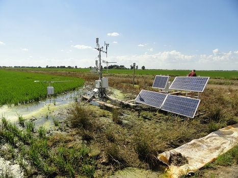 Innovative Project Curbs Greenhouse Gas Emissions From Mid-South Rice Fields   Eco Innovation   Scoop.it