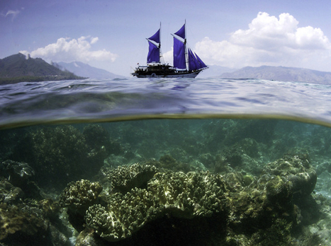 The Time For Oceans Has Come:  And Not A Moment Too Soon | OUR OCEANS NEED US | Scoop.it