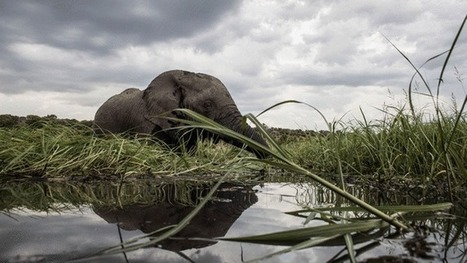 Botswana's 'shoot-to-kill policy' against suspected poachers | Wildlife Trafficking: Who Does it? Allows it? | Scoop.it