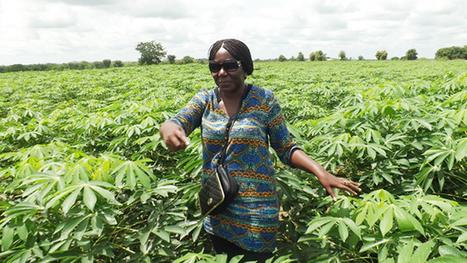 Bendjè sur la piste du modèle Songhaï - Gabonreview.com | Actualité du Gabon | | Confidences Canopéennes | Scoop.it