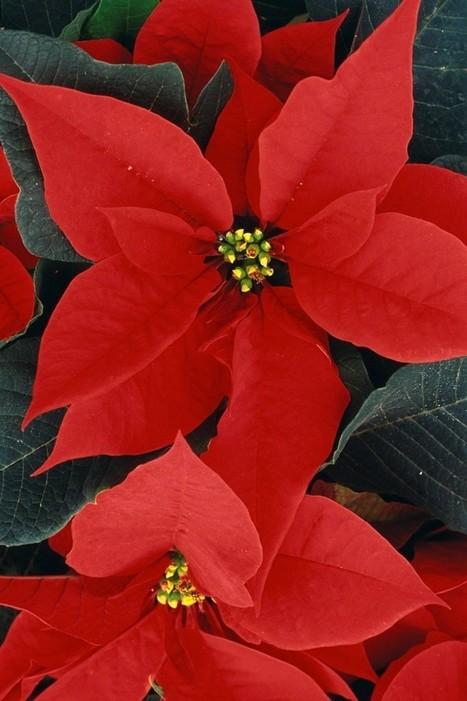 Natale per principianti | Italiano L2 | comeItaliani | comeItaliani. Lingua e cultura italiana | Scoop.it