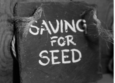 Nature's Security Blanket: Top 5 Reasons Why You Should Save Seeds | Sustain Our Earth | Scoop.it