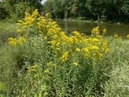 Allergy-Friendly Lawns | Amazing Blades Landscaping | Amazing Blades Landscaping | Scoop.it