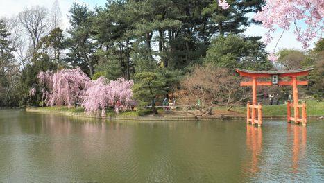 April 26 & 27  Sakura Matsuri & #bbgcherries blossoms - Bonsai &Traditional Kimonos - #brooklynbotanic   Brooklyn By Design   Scoop.it