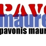Pave Mauremhet's Page | brooklyn music | Scoop.it