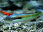 Pourquoi manger du poisson augmente-t-il la mémoire ? | Le Coran | Scoop.it