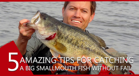 5 things to do while catching a big smallmouth fish | Fishing Spot App | Scoop.it