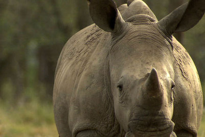 Five suspected poachers to appear in court - The New Age Online   Kruger & African Wildlife   Scoop.it