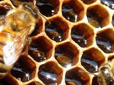 L'arnaque du faux miel, 30 % de contrefaçon en supermarchés | Toxique, soyons vigilant ! | Scoop.it