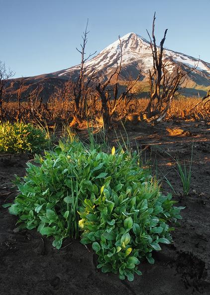 Volcán Lanín by Ricardo La Piettra | Mis imágenes | Scoop.it